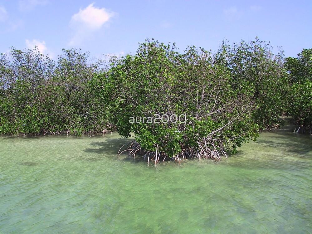 Mangroves in the Florida Keys  by aura2000
