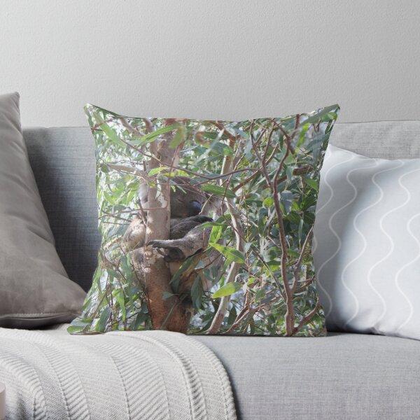 Koala in a tree, Morialta Conservation Park, S.A. Throw Pillow