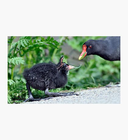 Mummy can I eat this  Photographic Print