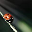 Ladybug Light by Vicki Field