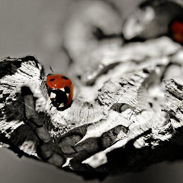 Ladybug on a stick macro by InspiraImage