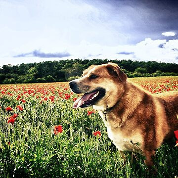 Dog in the Poppy Fields by InspiraImage