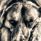 Grumpy Dog  by Vicki Field