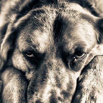 Grumpy Dog  by InspiraImage