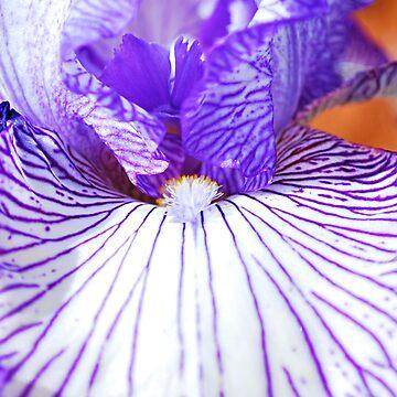 Violet  by gladyanne