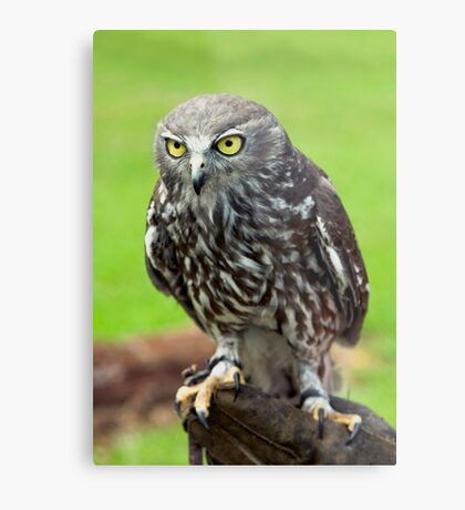 Green Eyes - barking owl Metal Print