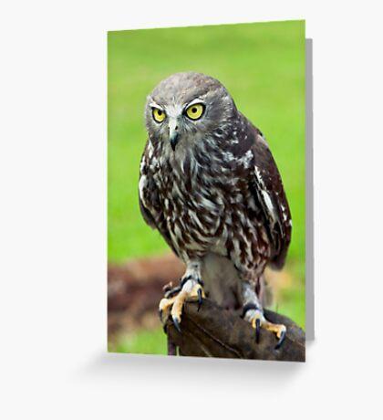 Green Eyes - barking owl Greeting Card