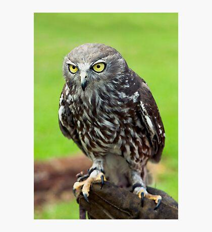 Green Eyes - barking owl Photographic Print