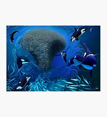 Orca, killer whale playing with bait ball of fish Photographic Print