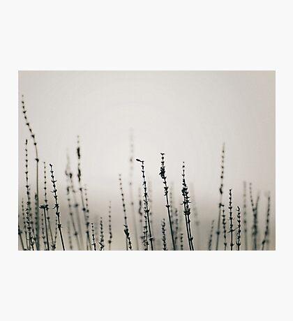 Gathering Photographic Print