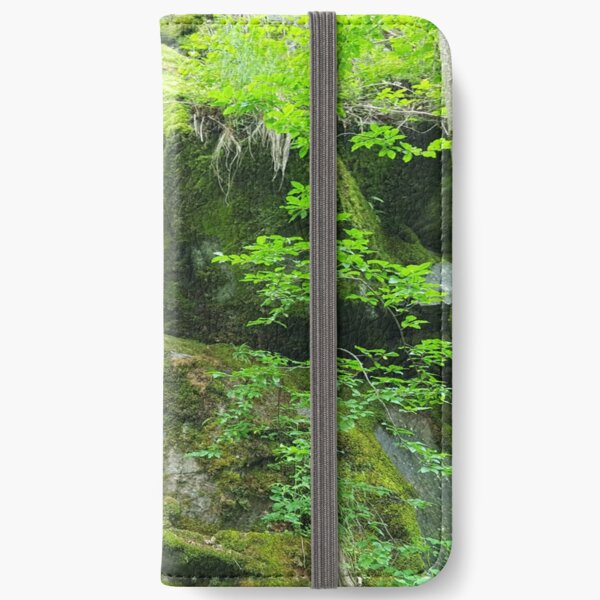 Forest scenery iPhone Wallet