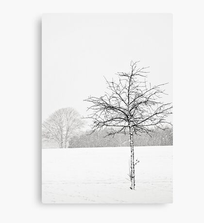 Silent winter Canvas Print