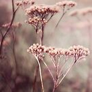 Pink by Anne Staub