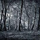 Forest by Anne Staub