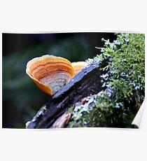 Maits Rest fungi #5 Poster