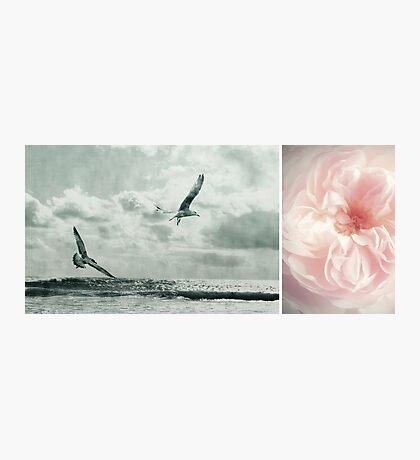 Nature ~ vintage Photographic Print