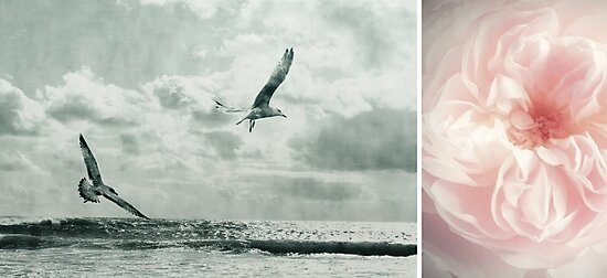 Nature ~ vintage by Anne Staub