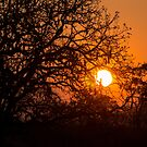 Sultry sun setting behind the sausage tree by vfphoto