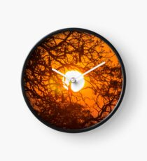 Sultry sun setting behind the sausage tree Clock