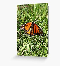 Monarch Butterfly in May? Greeting Card