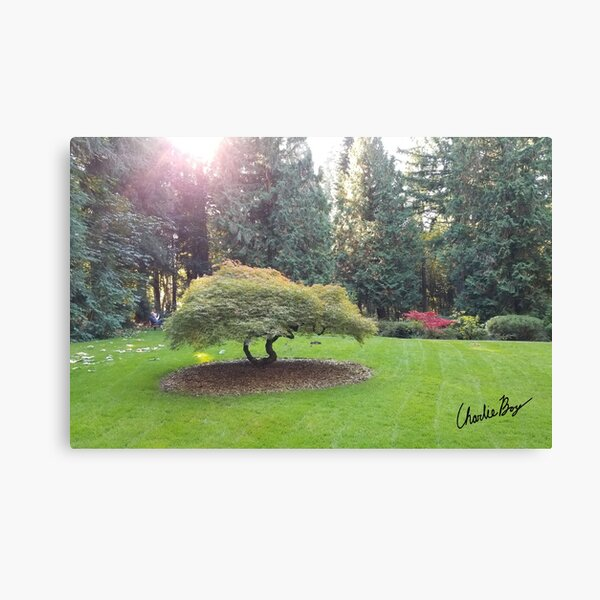 The Light Shines Through at the Grotto  Canvas Print
