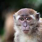 Monkey by Kristine Kowitz