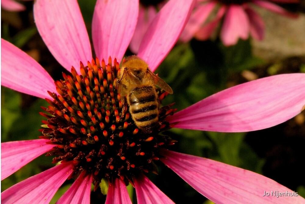 Flower Love to Bee by Jo Nijenhuis