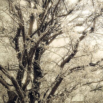 Frosted Tree by InspiraImage