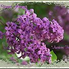 "God's Sweet Aroma ""Awakens the Senses"" by Robert W. Spath II"
