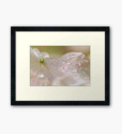 Lemon Meringue  Framed Print