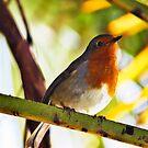 Little Red Robin bird by Vicki Field