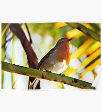 Little Red Robin bird Poster