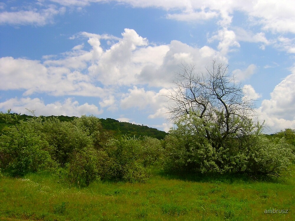 Clearing on the fringe of the woods near to Budapest  by ambrusz