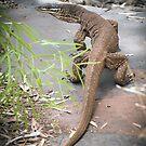 monitor - karijini, western australia by col hellmuth