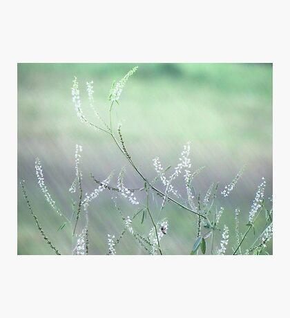 White and wild Photographic Print