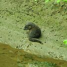 Young otter on the river bank by Russell Couch