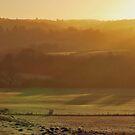 Misty Golden Green by relayer51