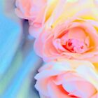 Dreimal die Schönheit von Diane Arndt