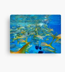 Blue sea and fishes Canvas Print