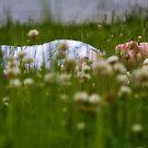 The Backyard Dreamer by Jennifer S.