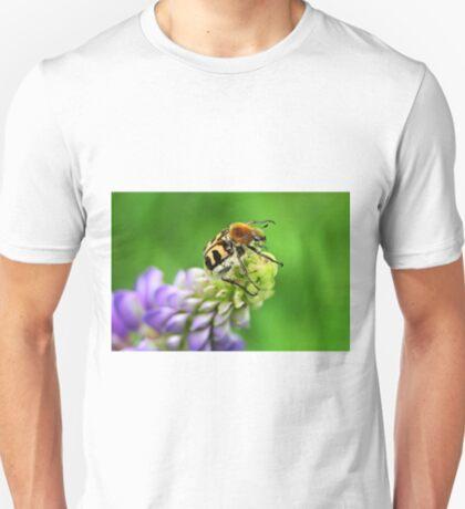 Bee Beetle on Lupinus T-Shirt