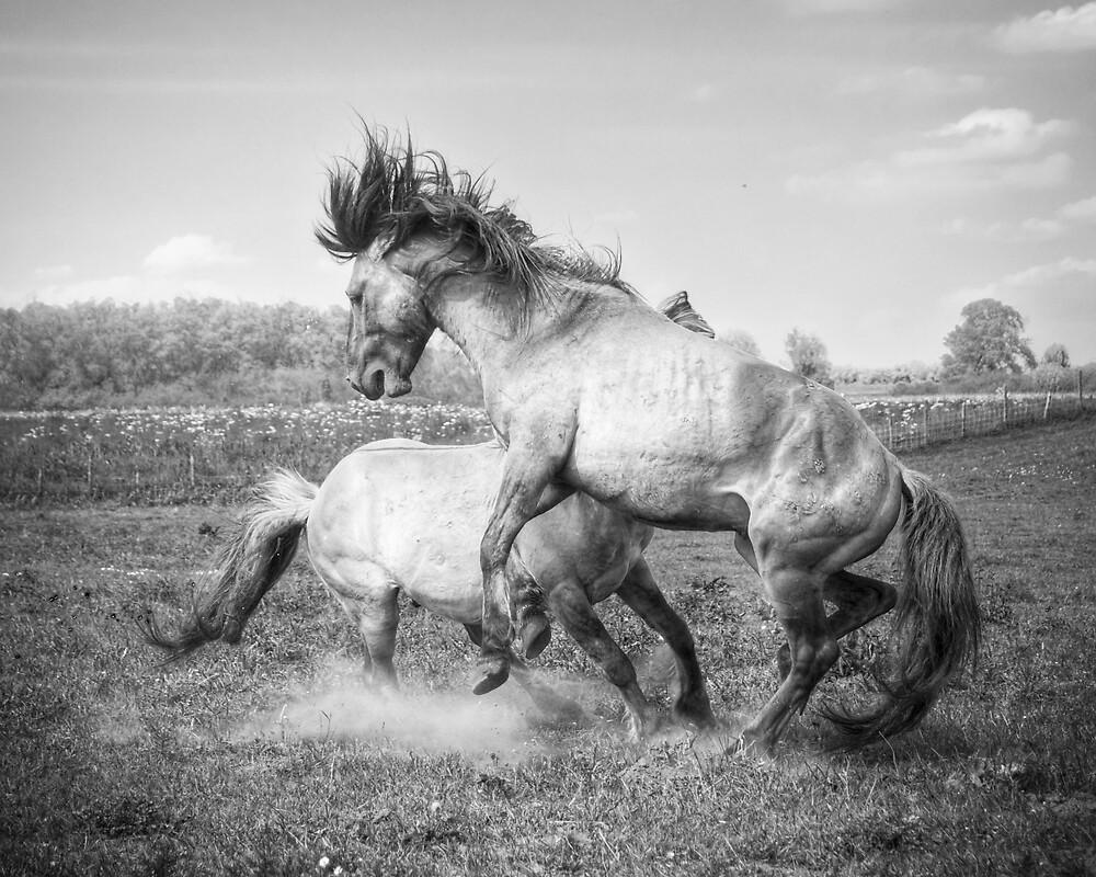 Horsepower in black & white by Henri Ton