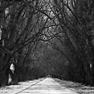 The Road Less Traveled by Maurie Alderson