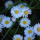 Daisy daisy..... by inglesina