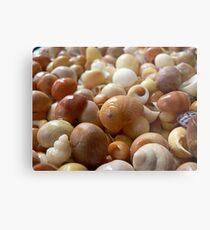 Seashells 1c Metal Print