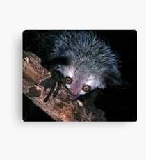 The face that launched a thousand superstitions Canvas Print