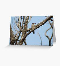 Kingfisher - KZN south coast Greeting Card
