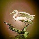 Egret on Show by Kristine Kowitz