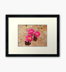 Escalante Cactus Framed Print