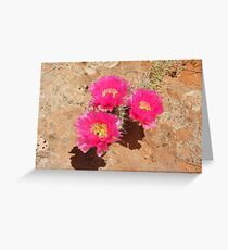 Escalante Cactus Greeting Card